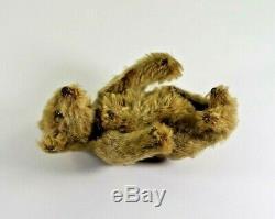 Antique Circa 1920's Steiff Honey Mohair Teddy Bear with Glass Eyes, No Button