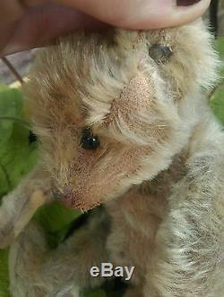 Antique Steiff Early 1900s jointed mohair german teddy bear ear button