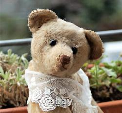 Charming 14 German Steiff Mohair humpback Teddy Bear shoe button eyes 1910