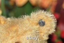 Charming 9 German goldblond mohair humpback Steiff Teddy pre war Button
